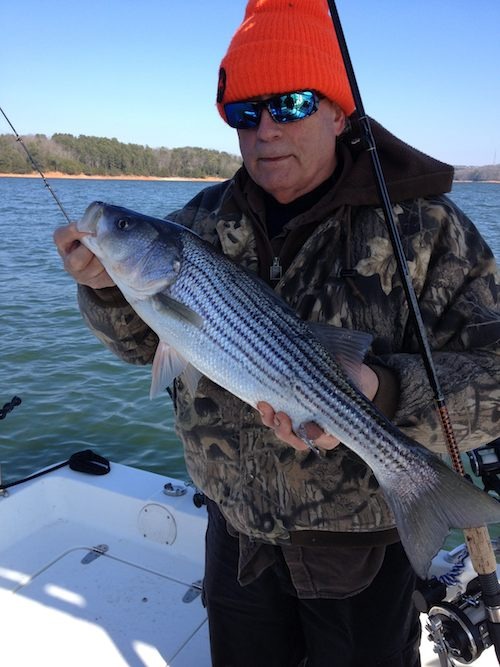 January 24 2013 uponlanier lake lanier fishing forum for Lake lanier fishing spots
