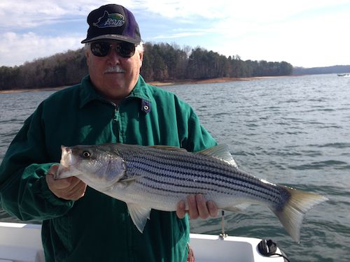 Lanier 11 23 12 uponlanier lake lanier fishing forum for Lake lanier striper fishing