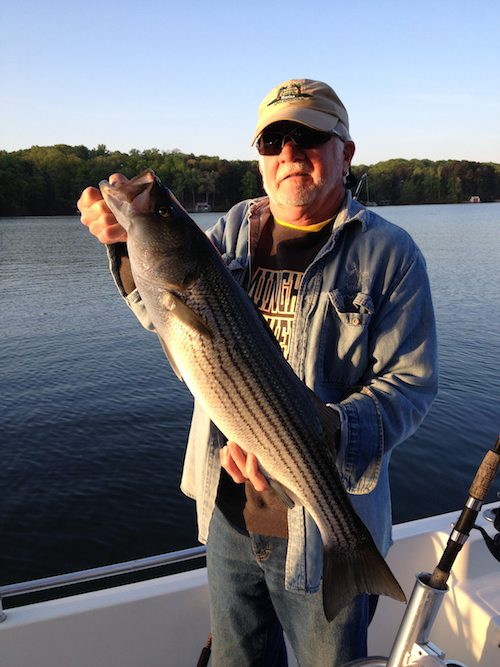 Last few days uponlanier lake lanier fishing forum for Lake lanier striper fishing
